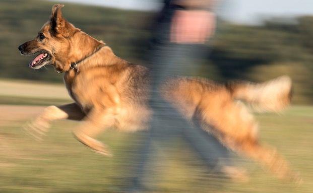 Wenn der Hundebiss 25.000 Euro kostet